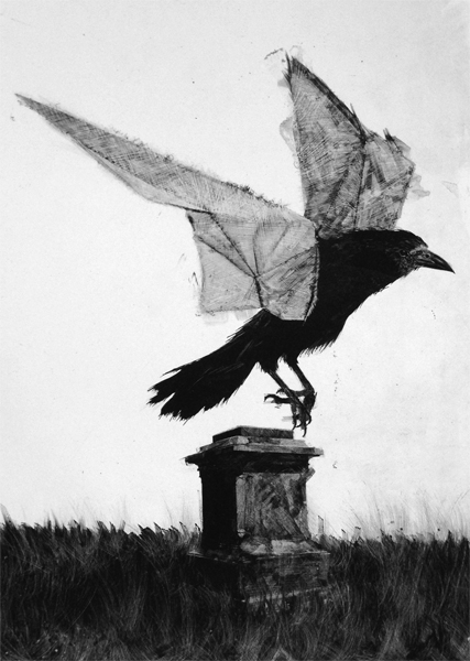 Retiring crow