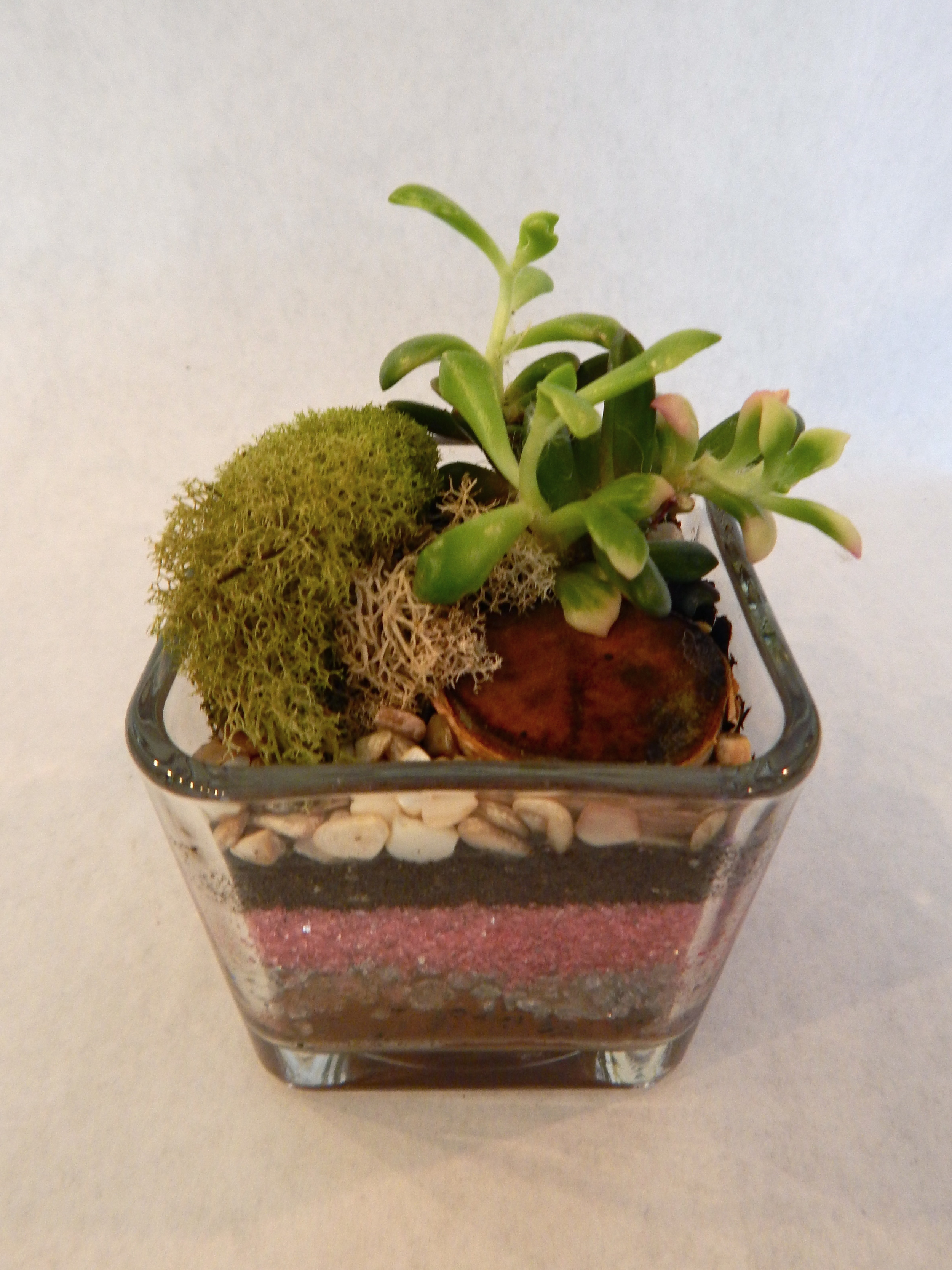 Join us for one of our terrific terrarium classes where you will make your own mini habitat and learn about succulent care, propagation, and more!