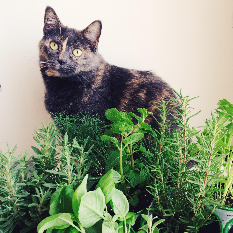 apartment herb garden