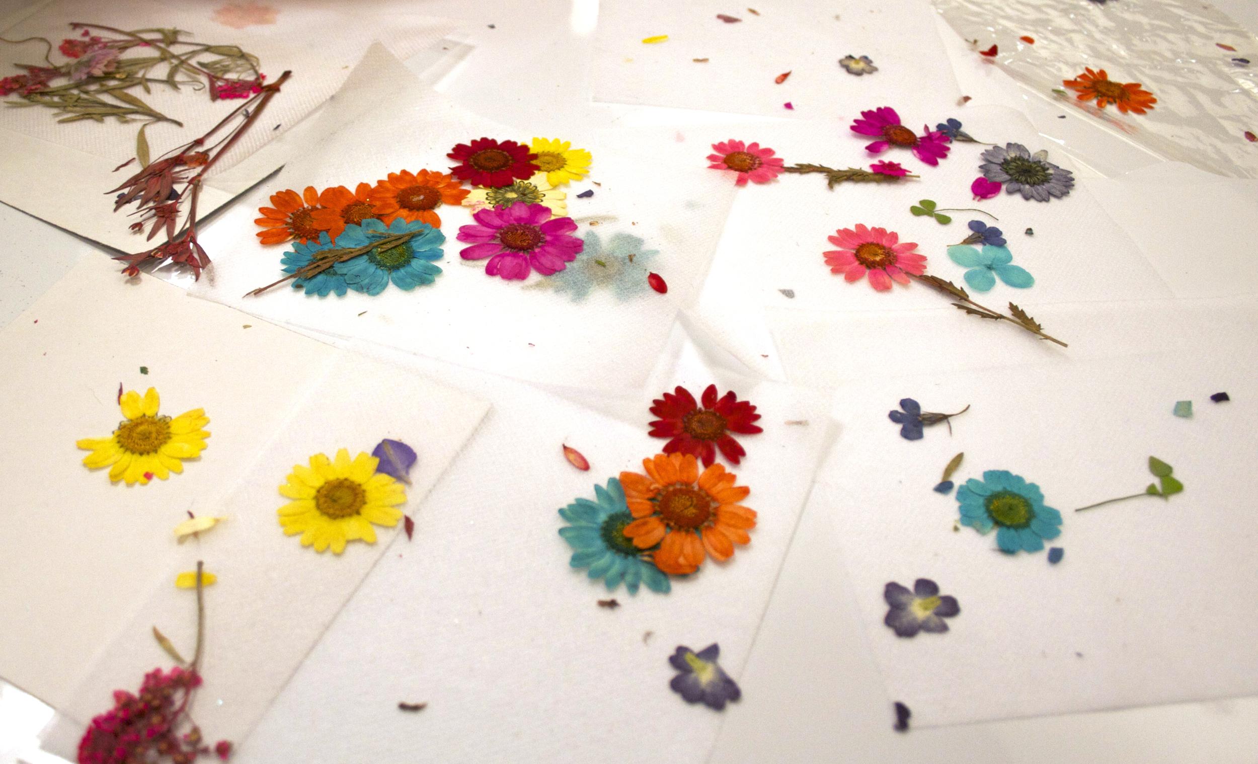 pressed_flowers_diy_macys.jpg
