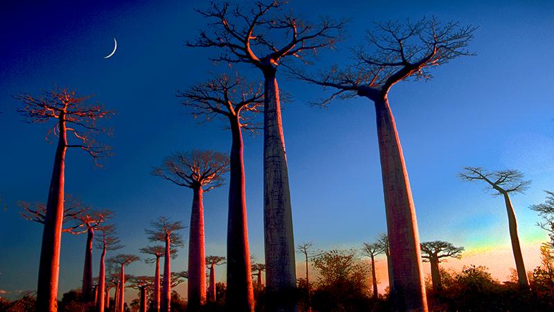 Madagascar_thumb