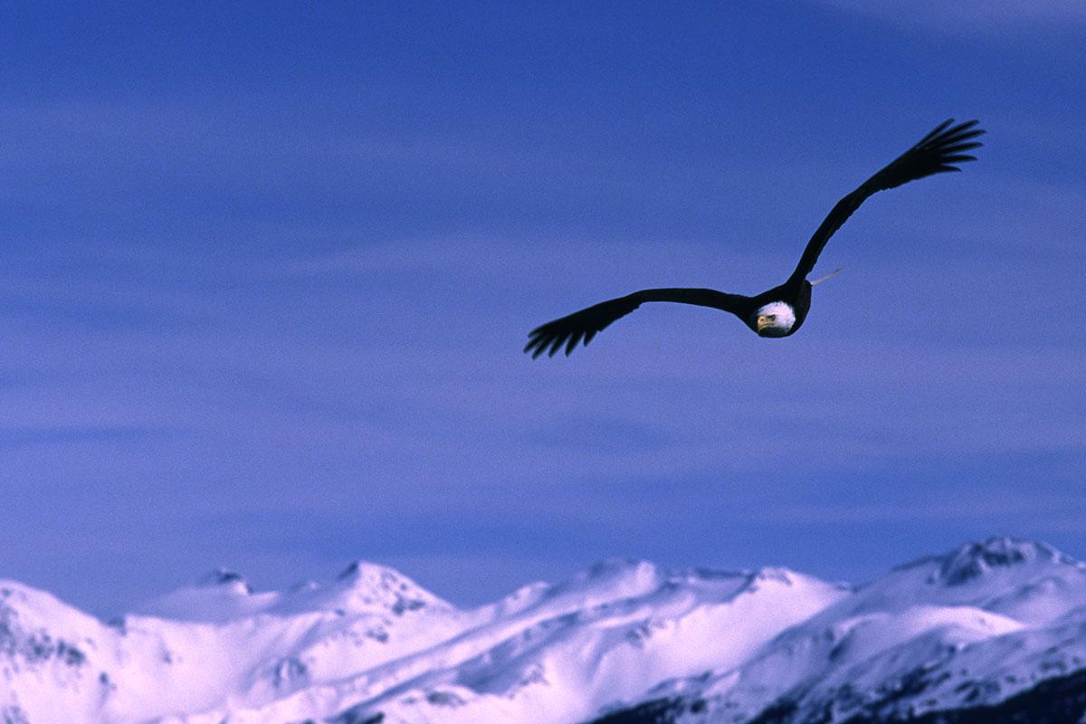 EagleSoar.jpg
