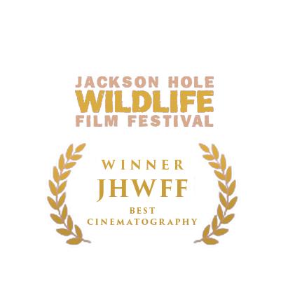 Jackson Hole Wildlife winner