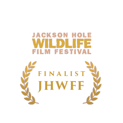 Jackson_Finalist.png