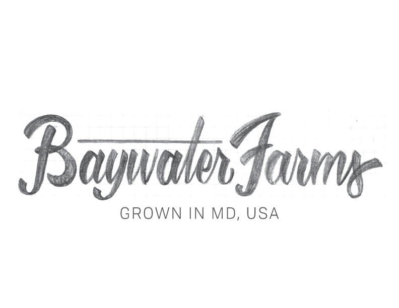 BaywaterFarms_LogoSketch_No2.png