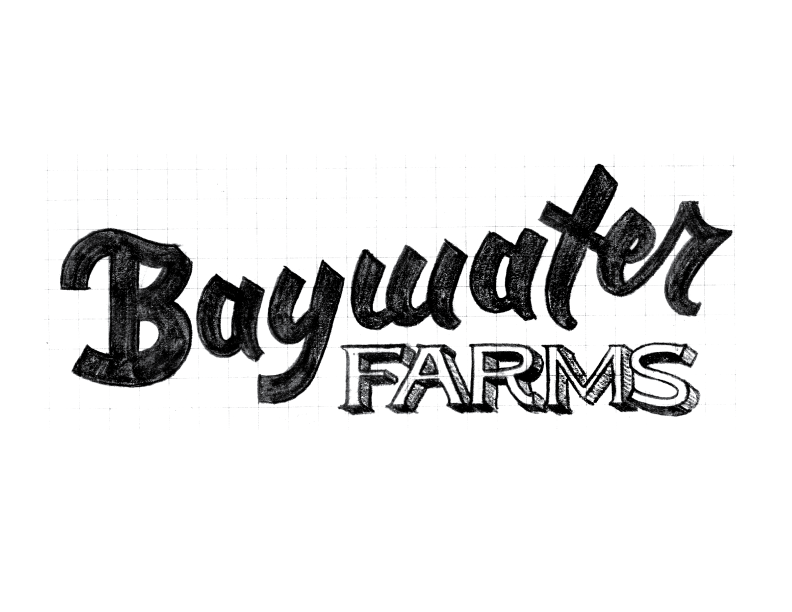 BaywaterFarms_LogoSketch_No5.png