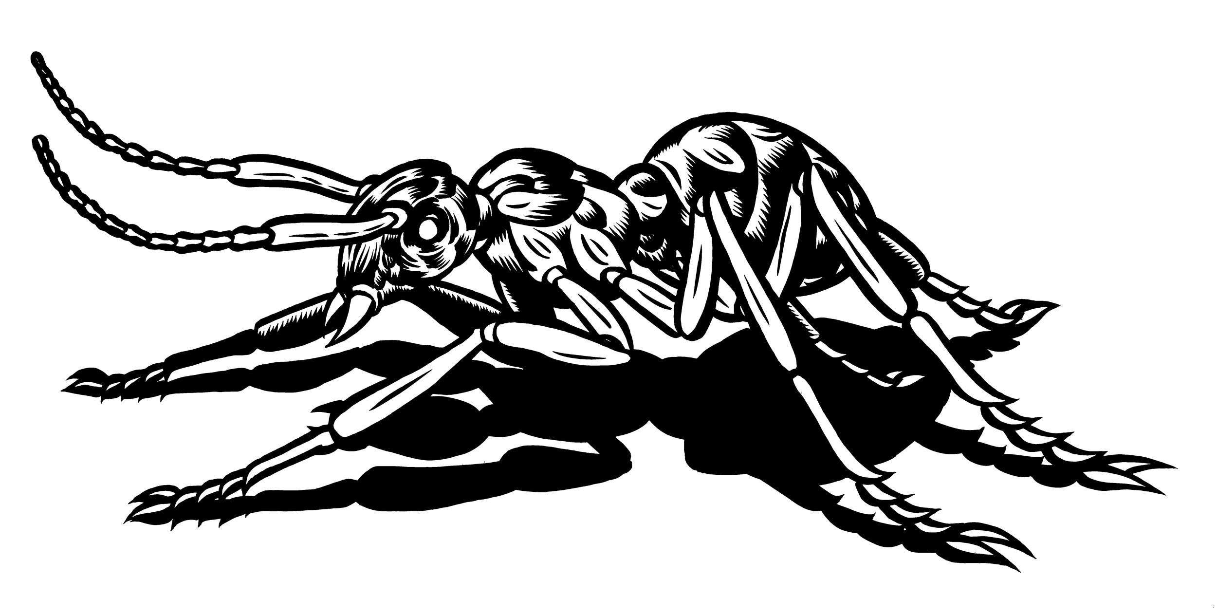 "Black Ant. 9""x14"". Permanent India Ink on Denril."