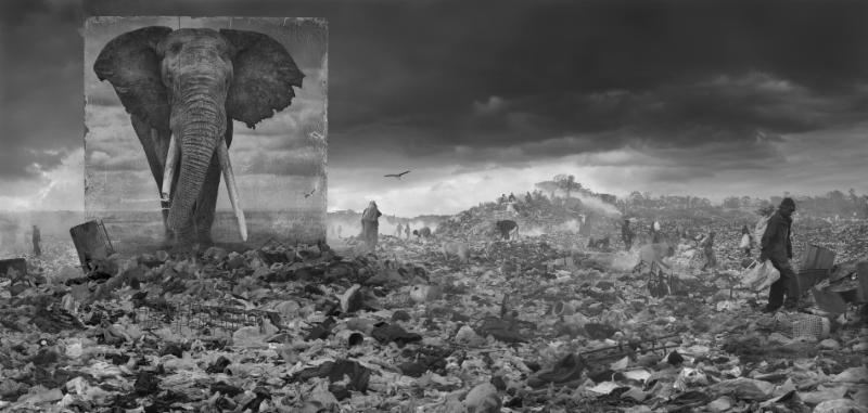 Wasteland with Elephant, 2015 by Nick Brandt