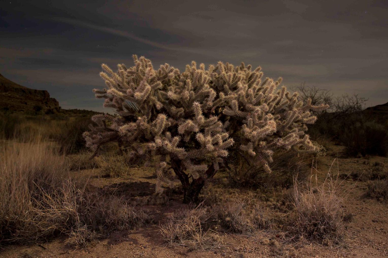 © Gerard Burkhart