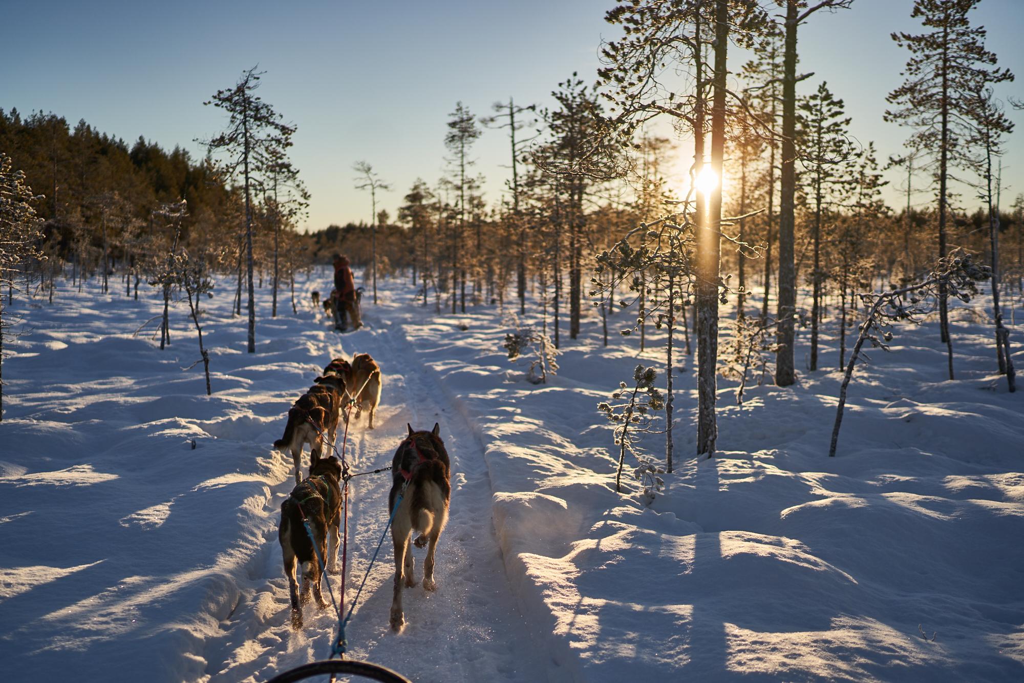 Zweden-2018-NIK01971.jpg