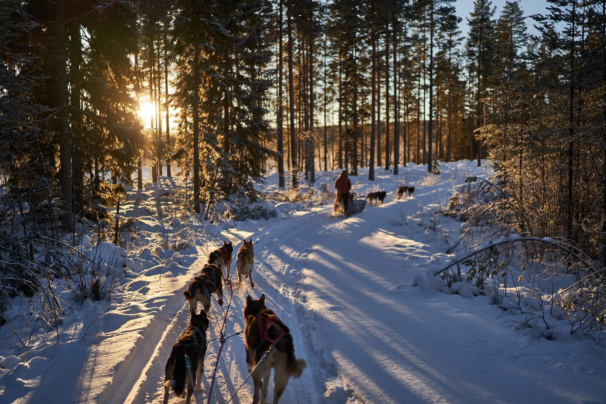 Zweden-2018-NIK01986.jpg