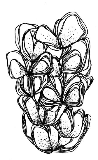 missvu illustration_46_o.jpg