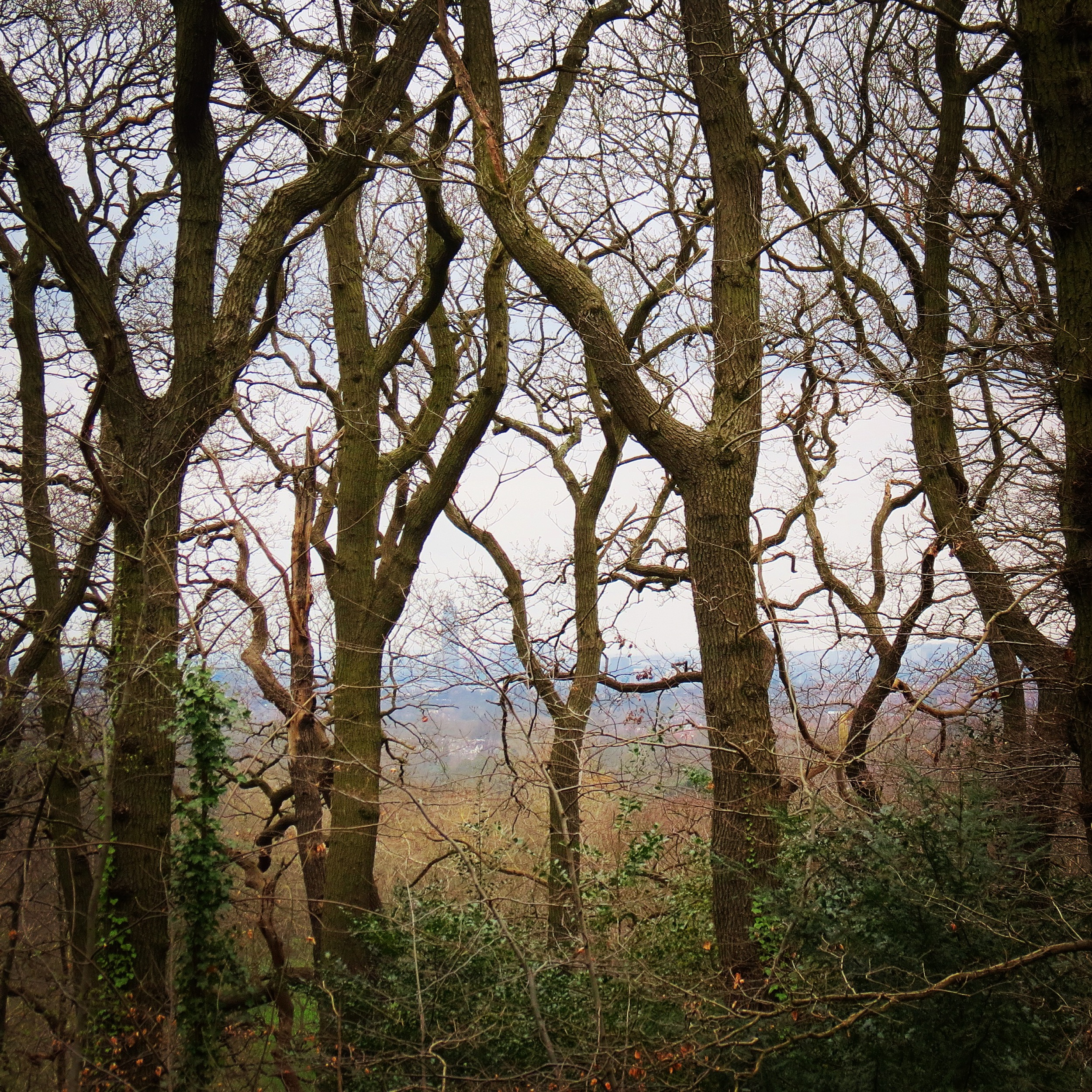 The city seems far from Sydenham Hill woods