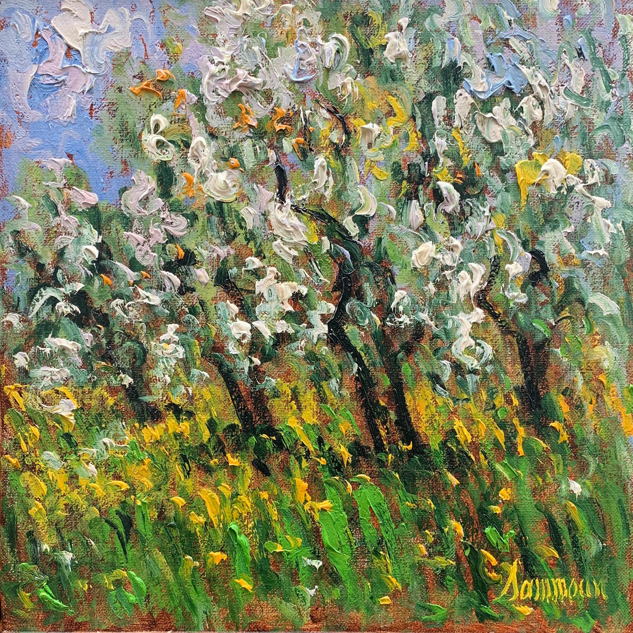 Pommiers en Fleurs, Ste Hilaire   oil, 16 x 16 in.