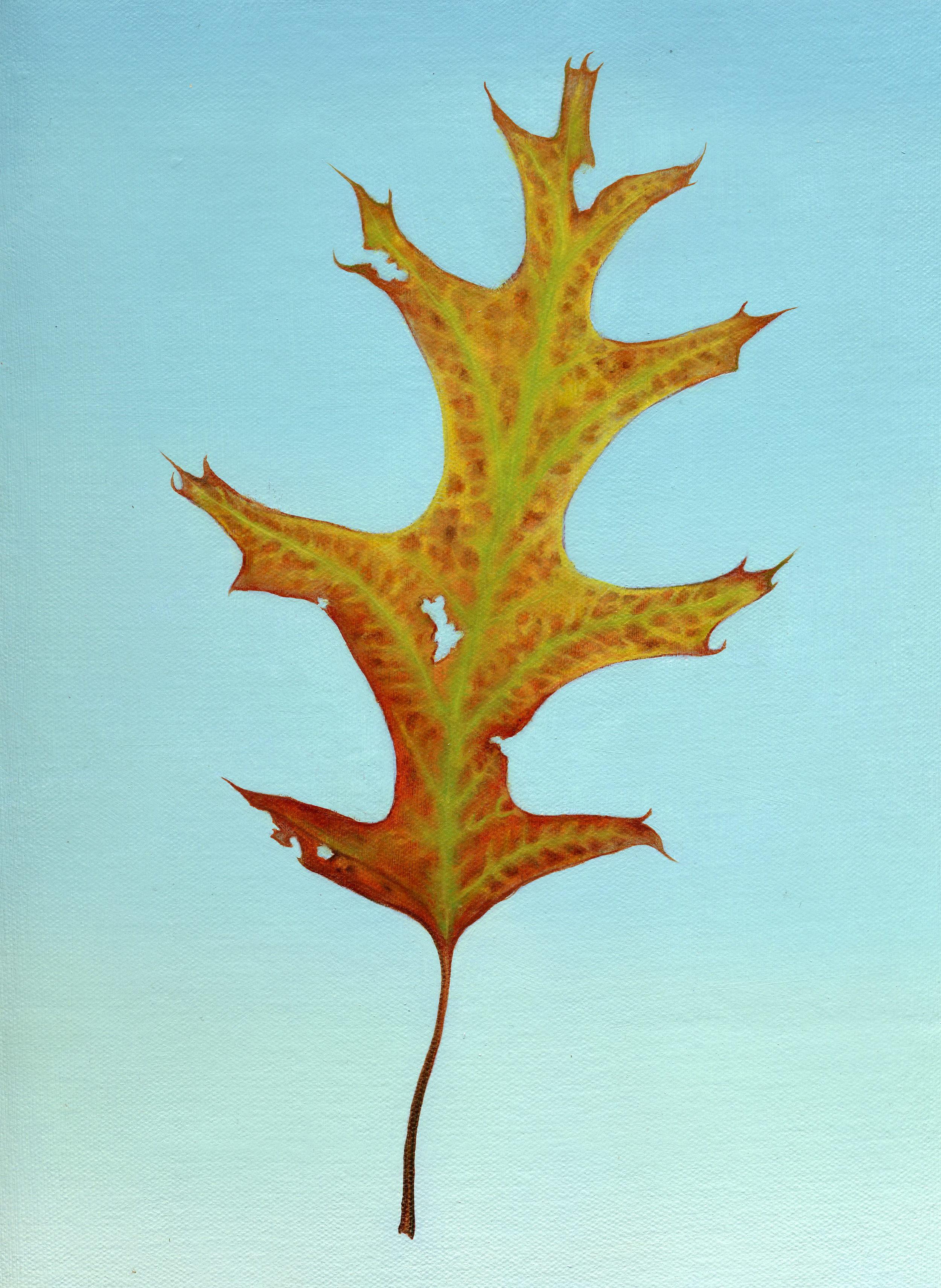 paint leaf oak leaf slide show300.jpg