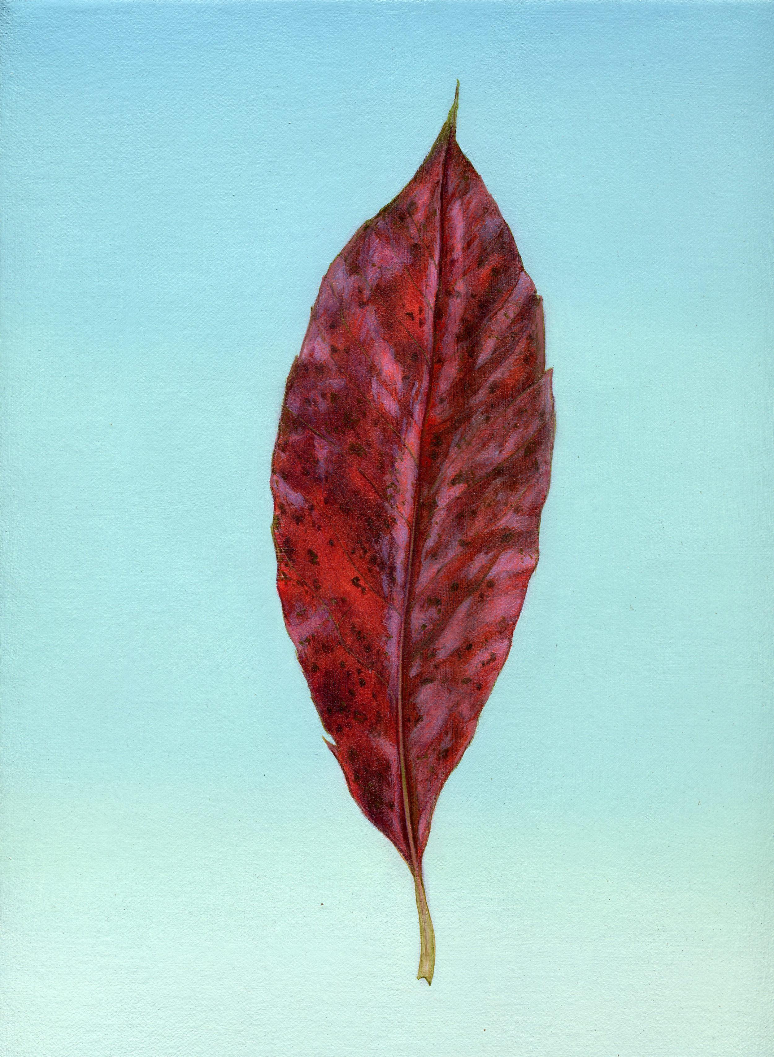 paint leaf red leaf slide show299.jpg