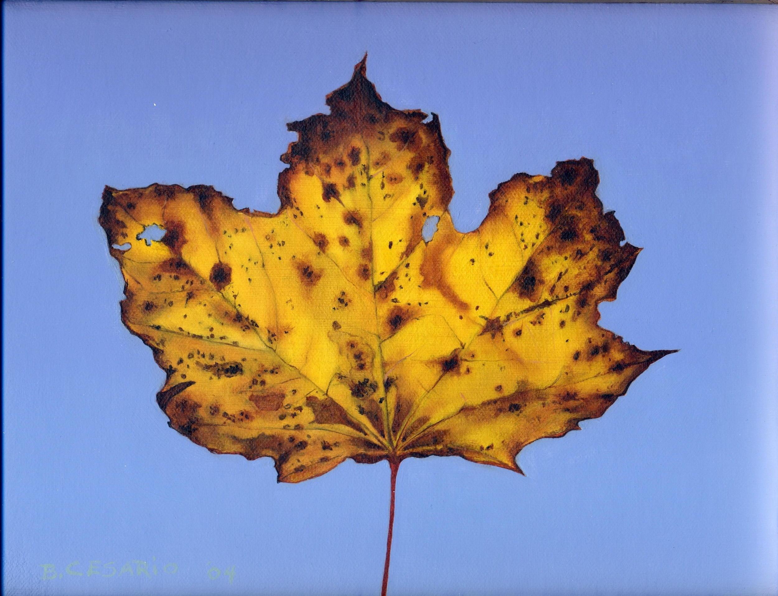 Brian Cesario yellow maple-oil on canvas-8x10.jpg