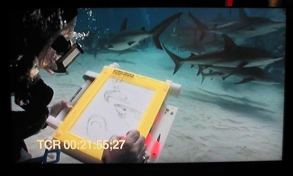 Does the wolrd really need sketches of live sharks? Maybe there is a reason no one else is doing this