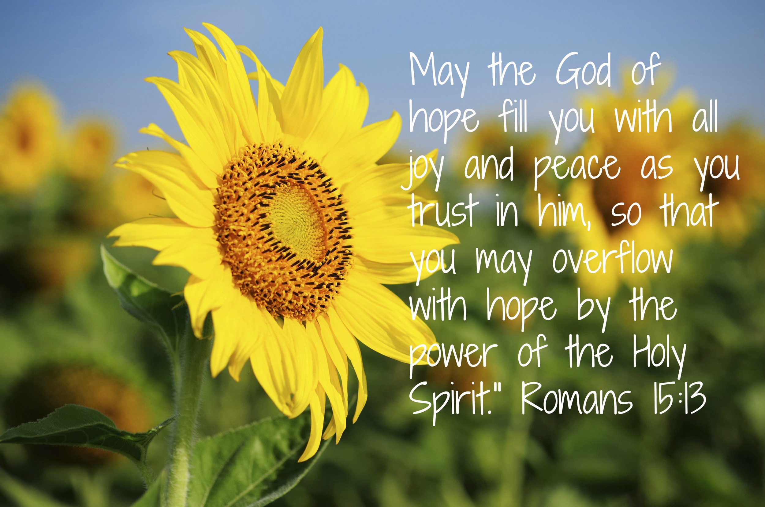 Romans 15 13.jpg