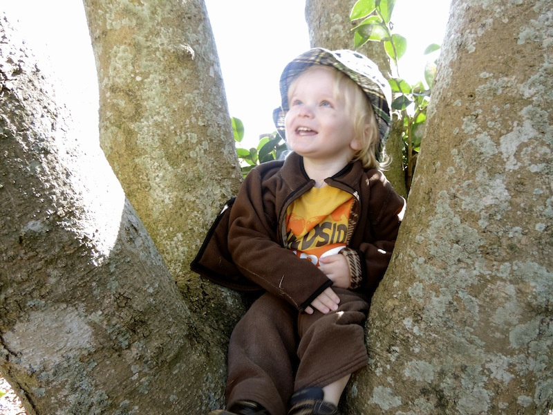 Ryals in a tree looking up.jpg