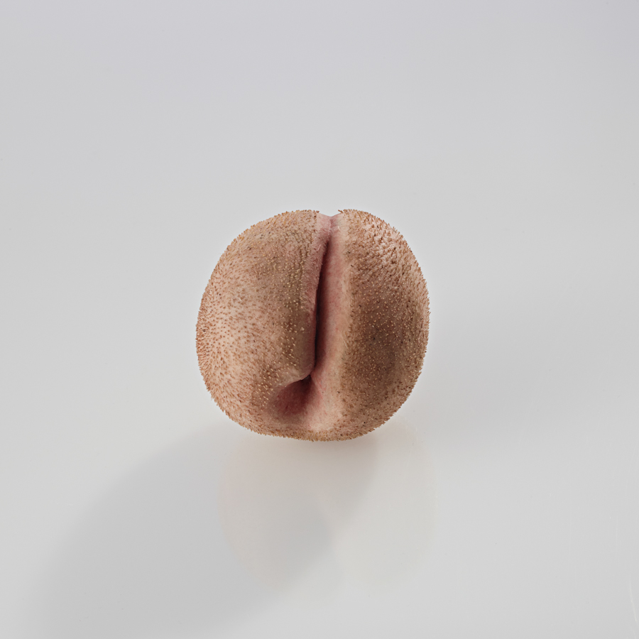 Peach , toned silicone, human hair, 2014 @Dušan Váňa / Photo @KIVA PHOTO