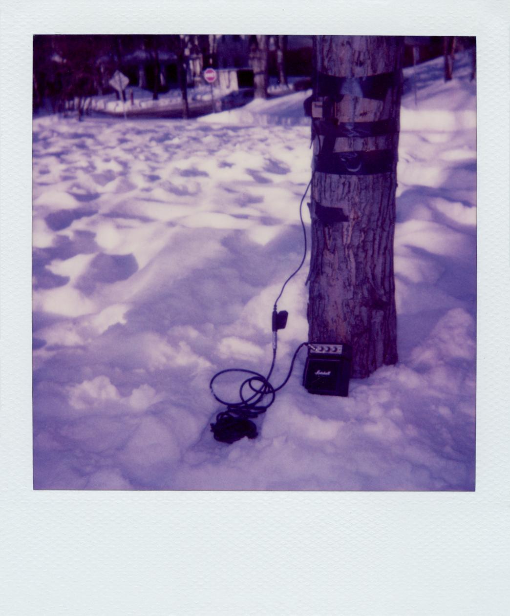 Music for trees , documentation of the installation, 2009 @Nataliya Petkova