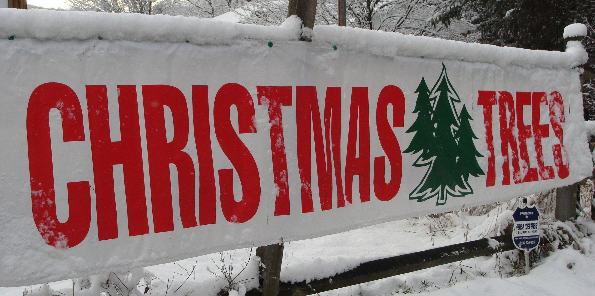 reeves-christmas-trees.jpg