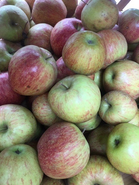 CAMEO APPLES (IN STOCK)    Description/Taste:  Cameo apples are covered in red stripes that develop just prior to the apple being ready for harvest. By picking the apples as soon as they develop this signature striping ensures their skin maintains the thin and delicate texture Cameo's are known. Its flesh is dense and creamy white to yellow in color with a crisp and juicy texture. The Cameo's flavor is the perfect balance of sweet and tart with nuances of both honey and citrus.  Current Facts:  Believed to be a relative of the Red and Golden Delicious apple, Cameo apples that come out of Washington State are regulated by the CAMA, or Cameo Apple Marketing Association. In order to be considered a Cameo, these apples must meet a list of standards based upon taste, texture and color.  Nutritional Value:  Cameo apples are sodium and cholesterol free and rich in soluble fiber, which has been shown to promote a healthy cardiovascular system. They also contain a fair amount of potassium and vitamin C as well as some iron, vitamin A and calcium. A recent study of the newest apple varieties conducted at the University of Bonn revealed that Cameo apples contained the highest amount of antioxidants of all thirty-one apples studied.