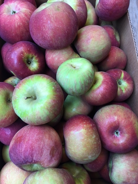 CORTLAND APPLES (IN STOCK)    Description/Taste:  Cortland apples are medium to large in size, and often rather flat in shape. They are bright red and covered with dark red streaks; often they are capped with a green blush. Their crisp, finely-grained white flesh is exceptionally juicy with a sharp, sweet-tart, vinous flavor.  Current Facts:  The Cortland apple is an older American variety of Malus domestica, one of the many offspring of McIntosh apples. It combines the sweet flavor of the McIntosh with the cold hardiness of its other parent, Ben Davis. Cortlands have long been one of the most commonly produced apples in New York, consistently ranking in the top ten in the state.  Nutritional Value:  Cortland apples are low in calories, high in water content and offer a fair amount of vitamins A, C, and B. They also contain a dietary fiber known as pectin, which has been shown to lower cholesterol levels, and trace amounts of boron, which has been touted for its ability to help build strong bones.  Applications:  Extremely slow to brown when cut, the Cortland apple is perfect for use in fresh apple preparations. Add cubed apple to green and fruit salads. Slice thin and add to sandwiches, burgers, and quesadillas. Use in lieu of crackers and pair with sweet and savory dips or flavorful cheeses. The sweet-tart flavor of the Cortland apple also shines in cooked preparations. Bake into cakes, tarts, cobbler, quiche and galettes, or slow cook to make soups, sauces, and preserves. Cortlands also make excellent cider and juice apples. They do not store exceptionally well, and should be eaten soon after harvest for best flavor and texture.