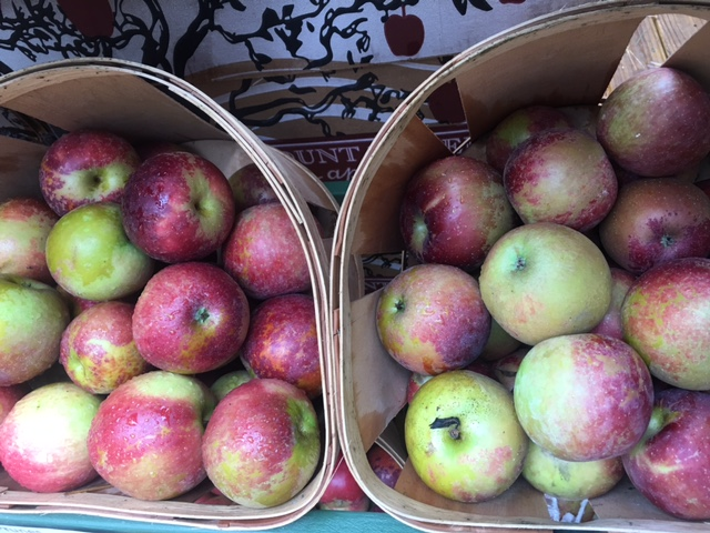 ARKANSAS BLACK APPLE (IN STOCK )    Description/Taste:  Arkansas Black apples are vivid red to dark purple with a somewhat waxy skin. Its flesh is golden hued and juicy with a fine-grained and crisp texture. Its highly aromatic and sweet-tart flavor mellows and becomes more palatable with storage. The flesh as well will soften with storage, when first harvested the Arkansas Black apple is extremely hard, almost to the point that many would find it difficult to eat out of hand.  Current Facts:  A member of the rose family (Rosaceae), the exact parentage of the Arkansas Black apple is unknown, but it is believed to be a relative of the Winesap apple. Known as one of the best storage apples the Arkansas Black will keep up to four months in cold storage during which time both the flavor and texture of the apple improves.  Nutritional Value:  Arkansas Black apples are a great source of soluble fiber, which helps to reduce cholesterol and prevent cardiovascular diseases. In addition they contain insoluble fiber, which promotes healthy digestion. They are also a good source of vitamin C and A and contain some potassium and iron.  Applications:  The firm texture of the Arkansas Black apple makes it an excellent cooker. It can be baked, sautéed and roasted. Try baked into a pie or bread pudding. They can also be slow cooked and pureed to make soups and sauces. Its aromatic juice lends itself to ciders and jams. The flavor of the Arkansas Black pairs well with by winter squash, pecans, cranberries, vanilla, thyme, sage, cinnamon and cardamom.