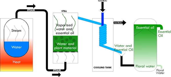 In this figure,the water tank producing the steam is kept separate from the drum containing the plant material.