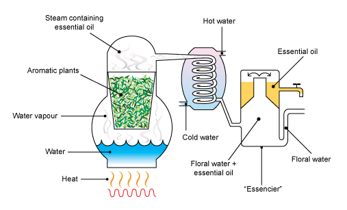 In this figure, the drum containing the plant matter is contained in the same unit as the water that is boiled to produce steam.