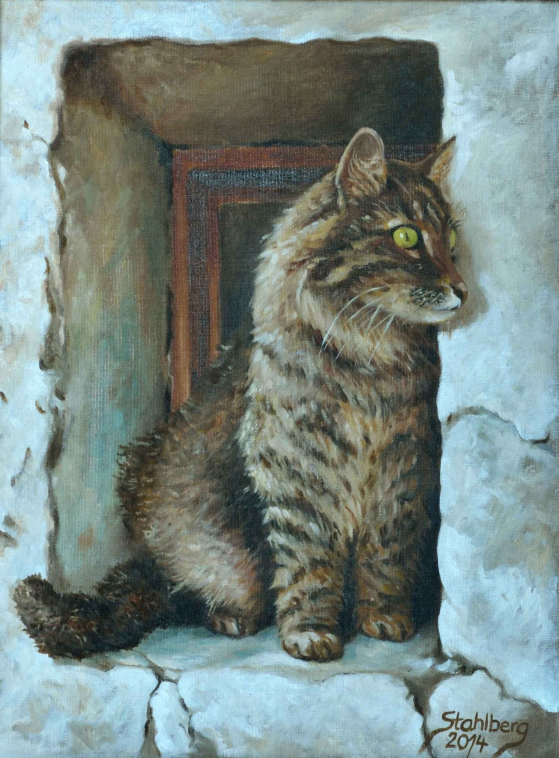 norwegische Katze