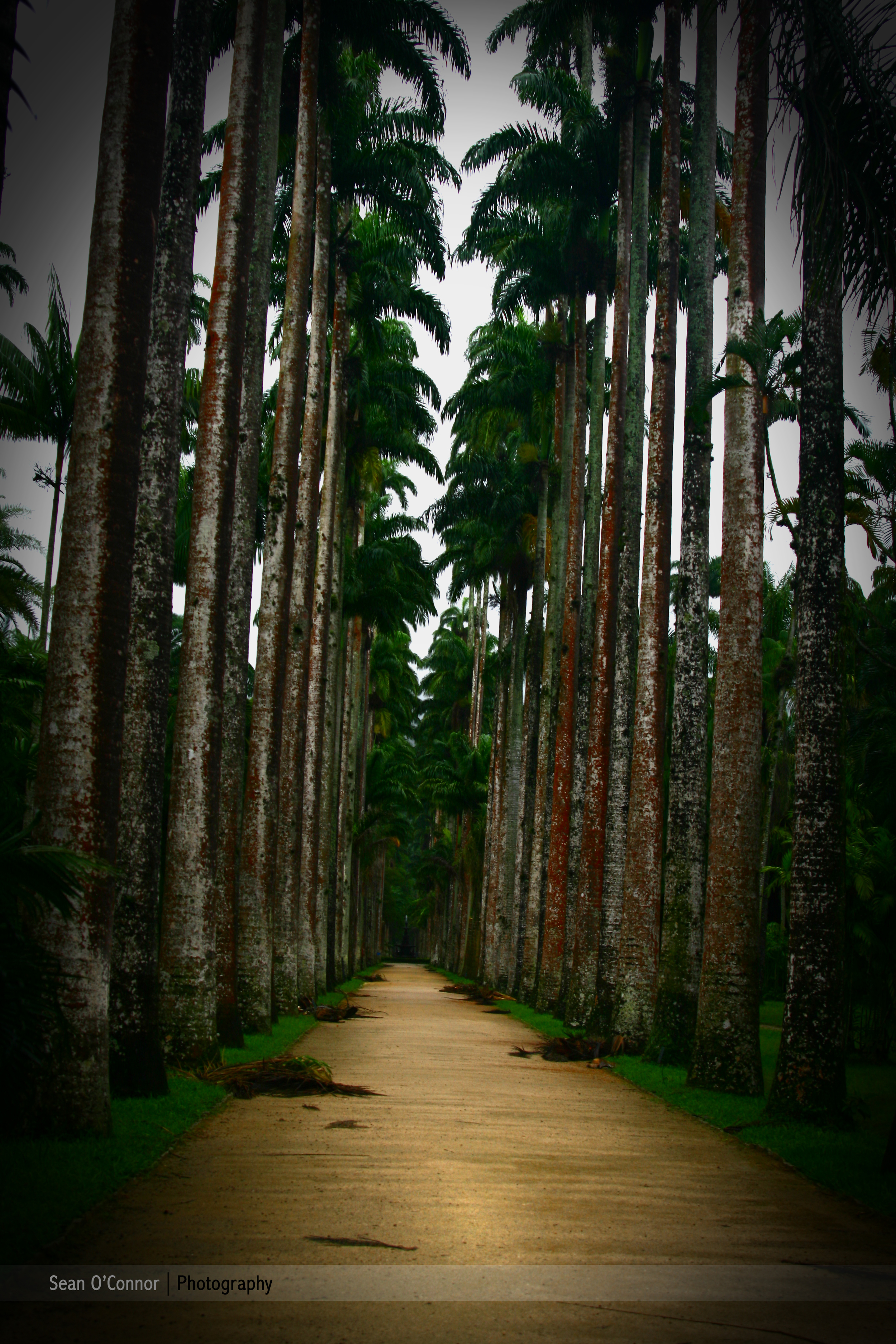 road with palms.jpg