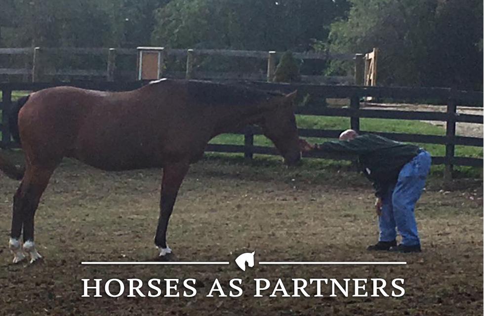 horses-partners.jpg