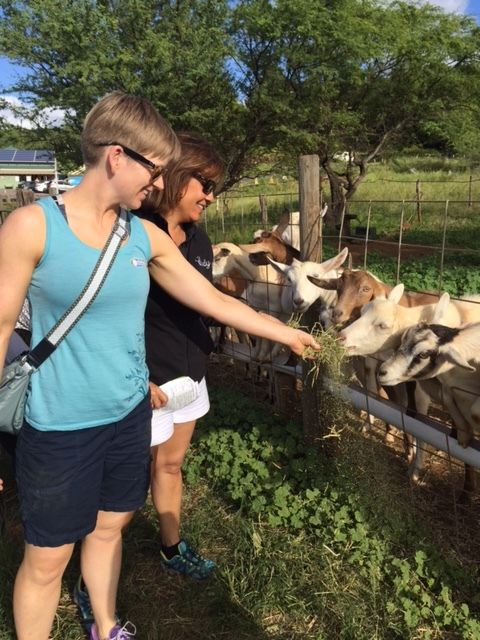 Feeding the goats at the surfing goat dairy in Kula