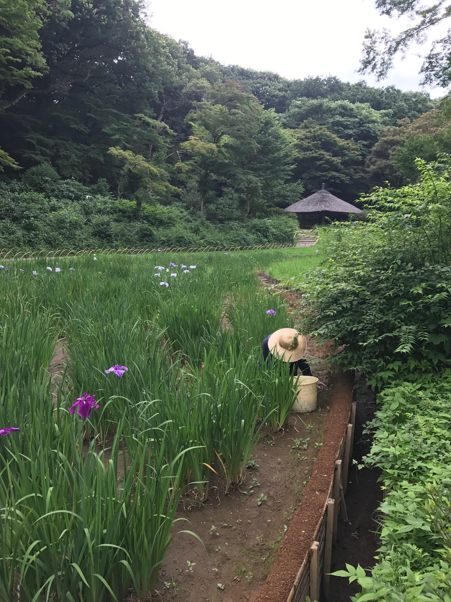 Inner Garden - Meiji Shrine