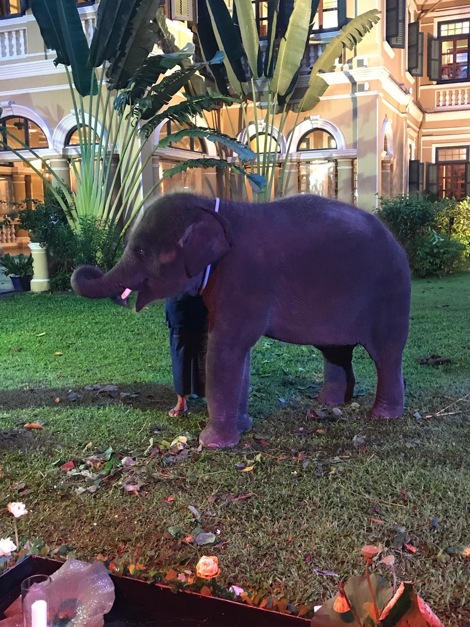 Baby Elephant at the Blue Elephant