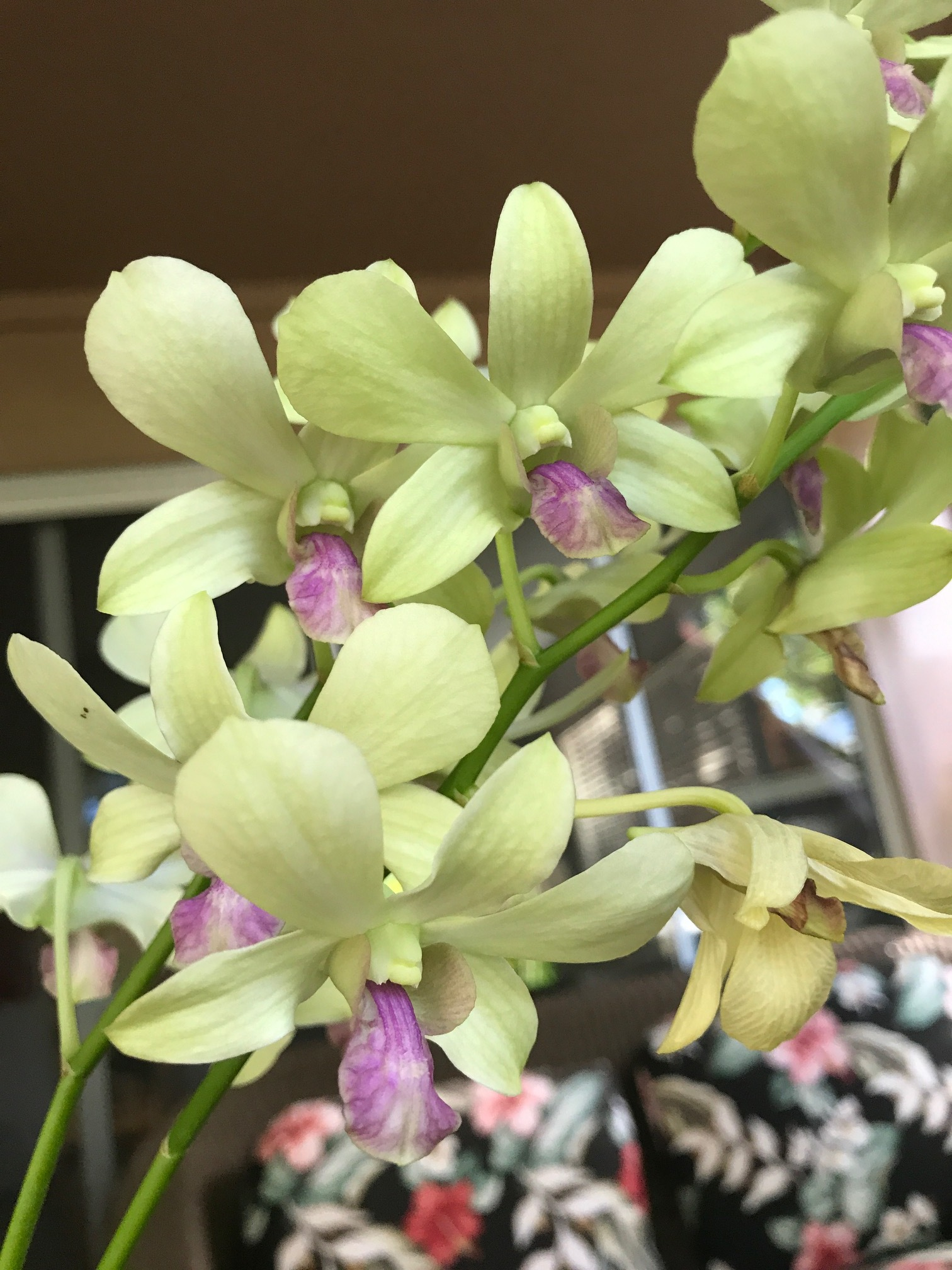 Orchid Plant - www.stampedwithaloha.com