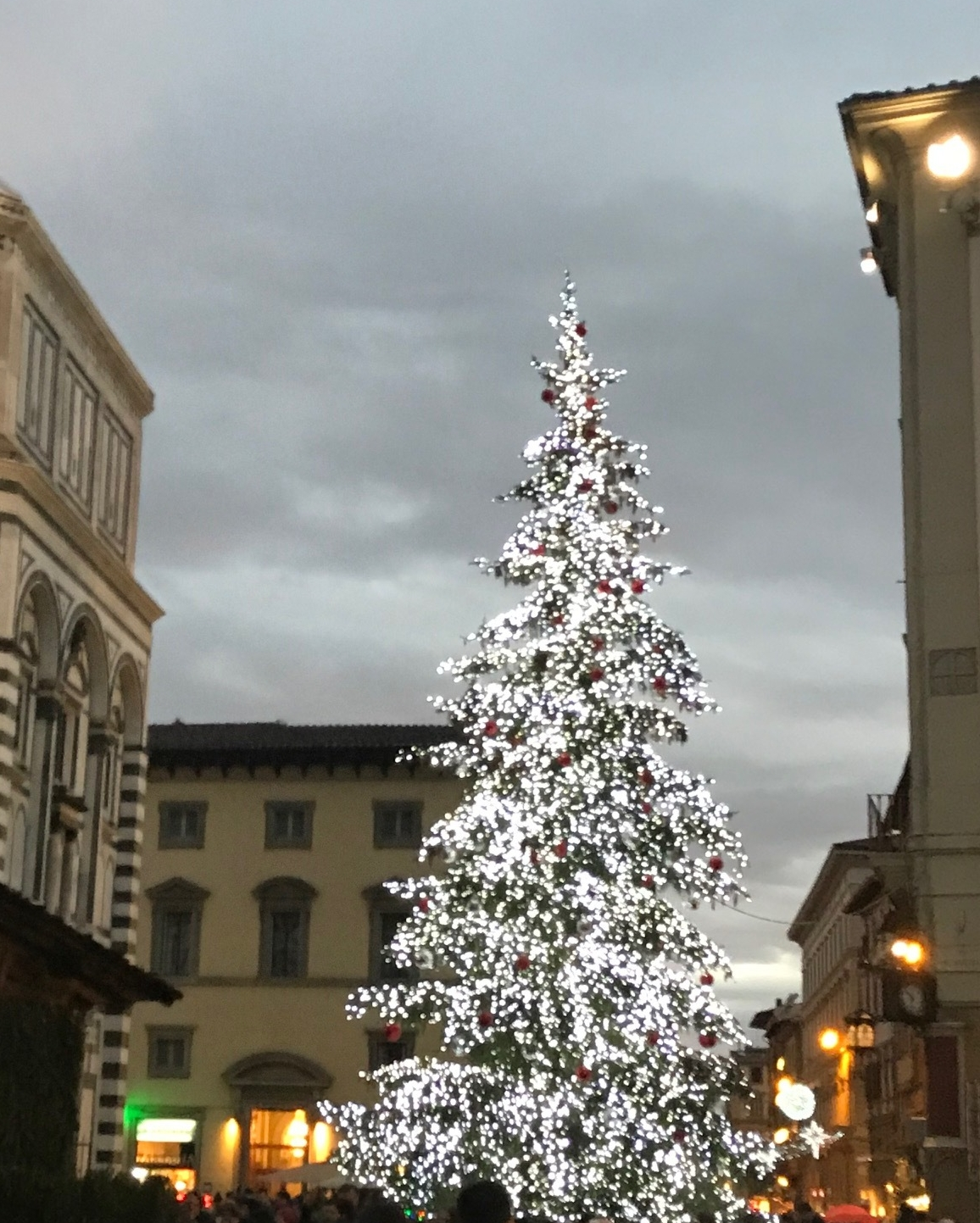 Christmas Tree in Florence, Itally