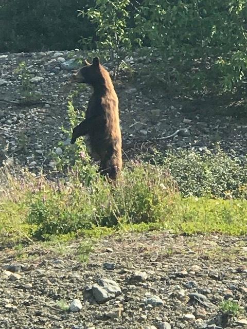 It's a Bear!!!