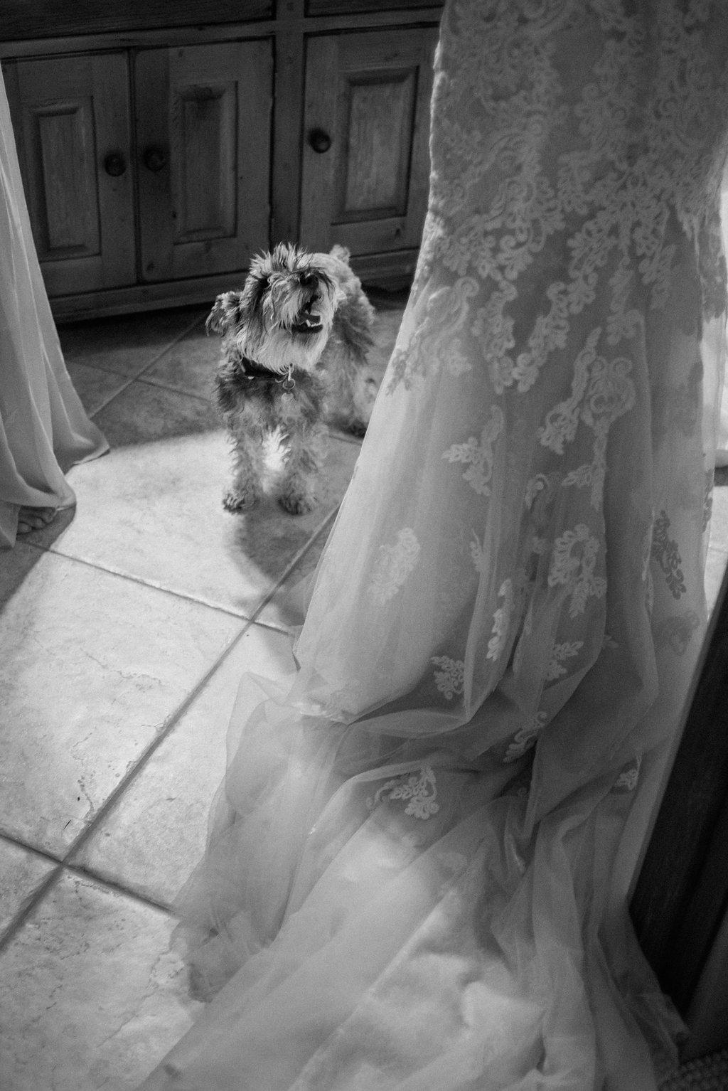 Morrill-Wedding-7.jpg