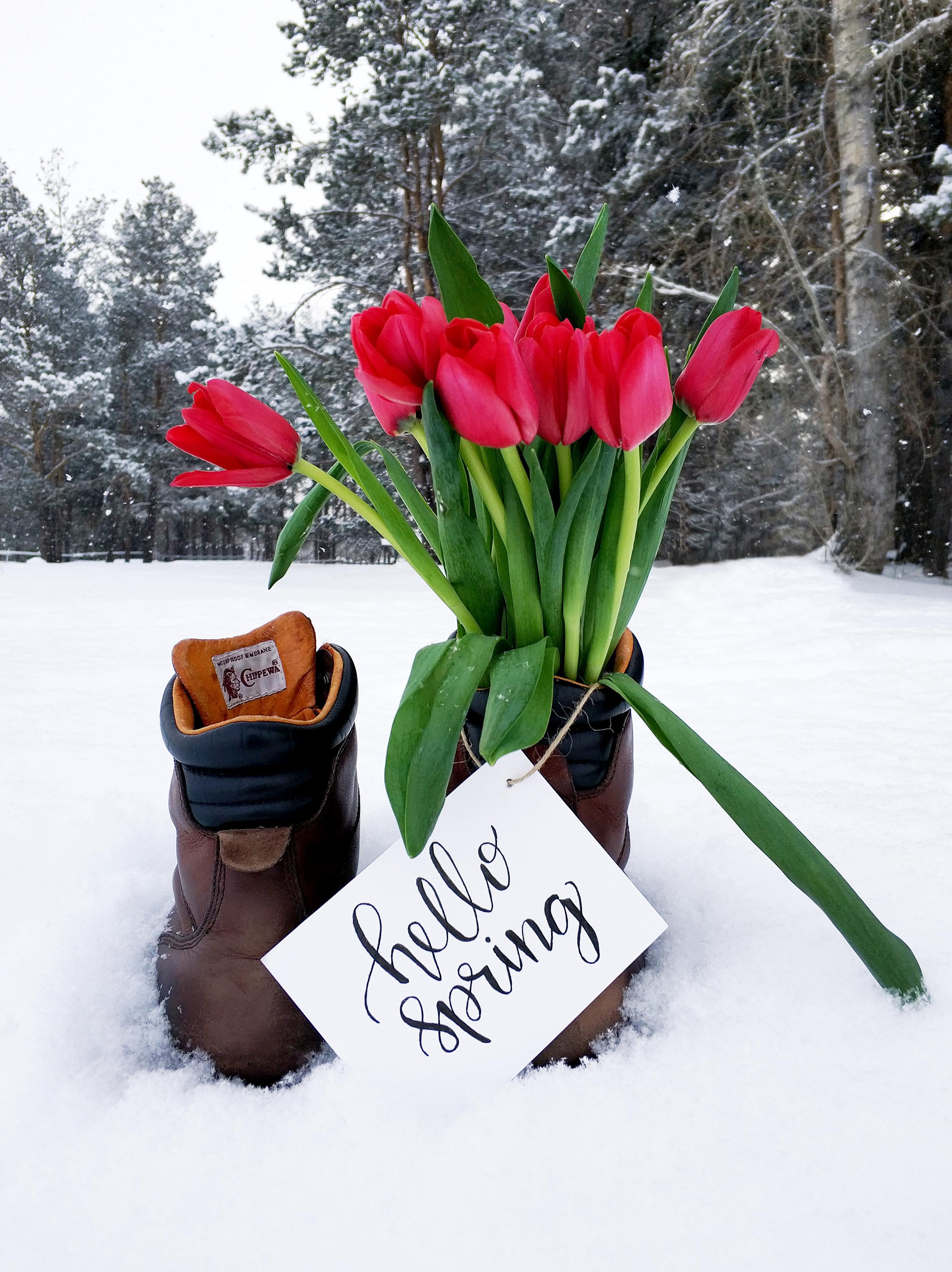 hello spring.jpeg