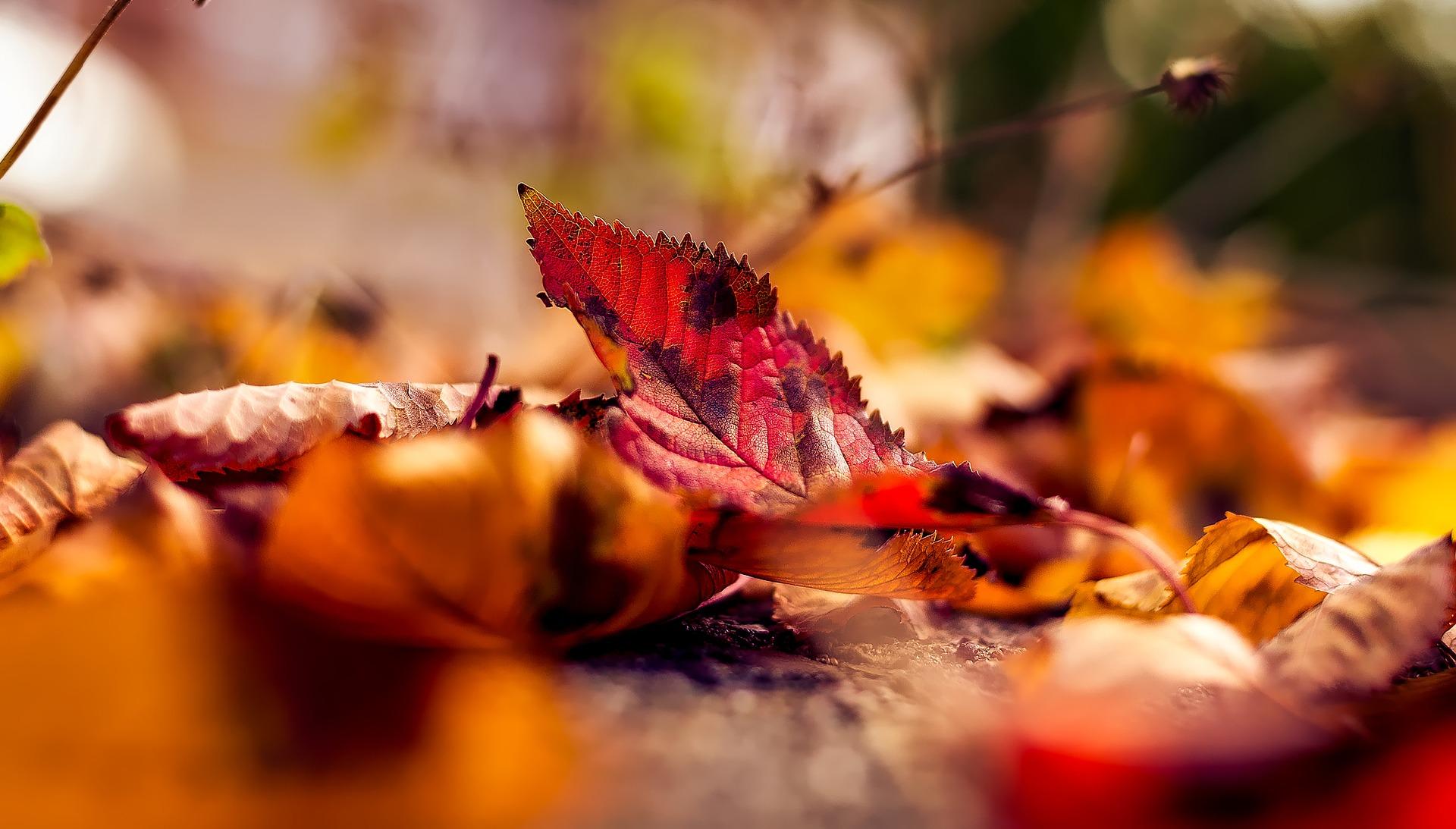 leaves - med.jpg