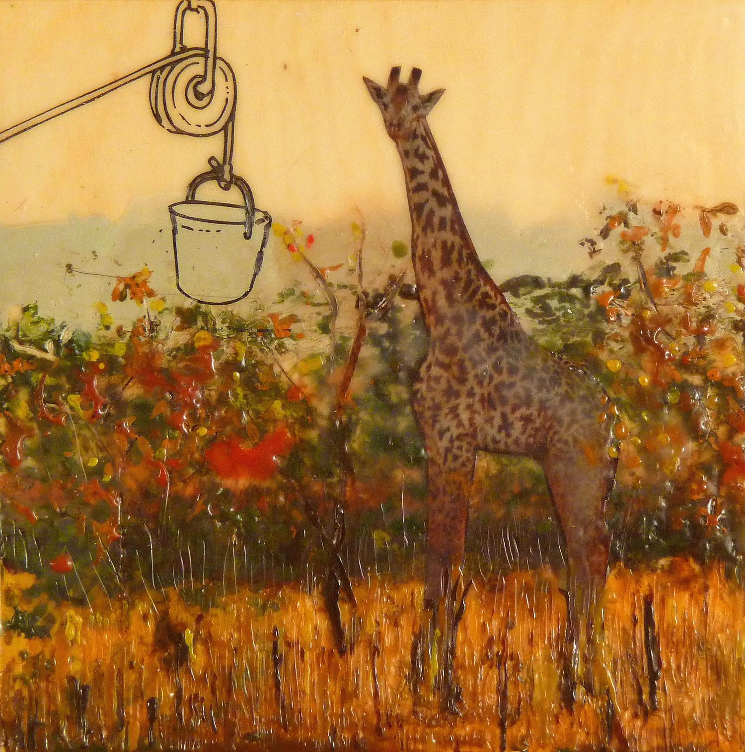 feed the giraffe