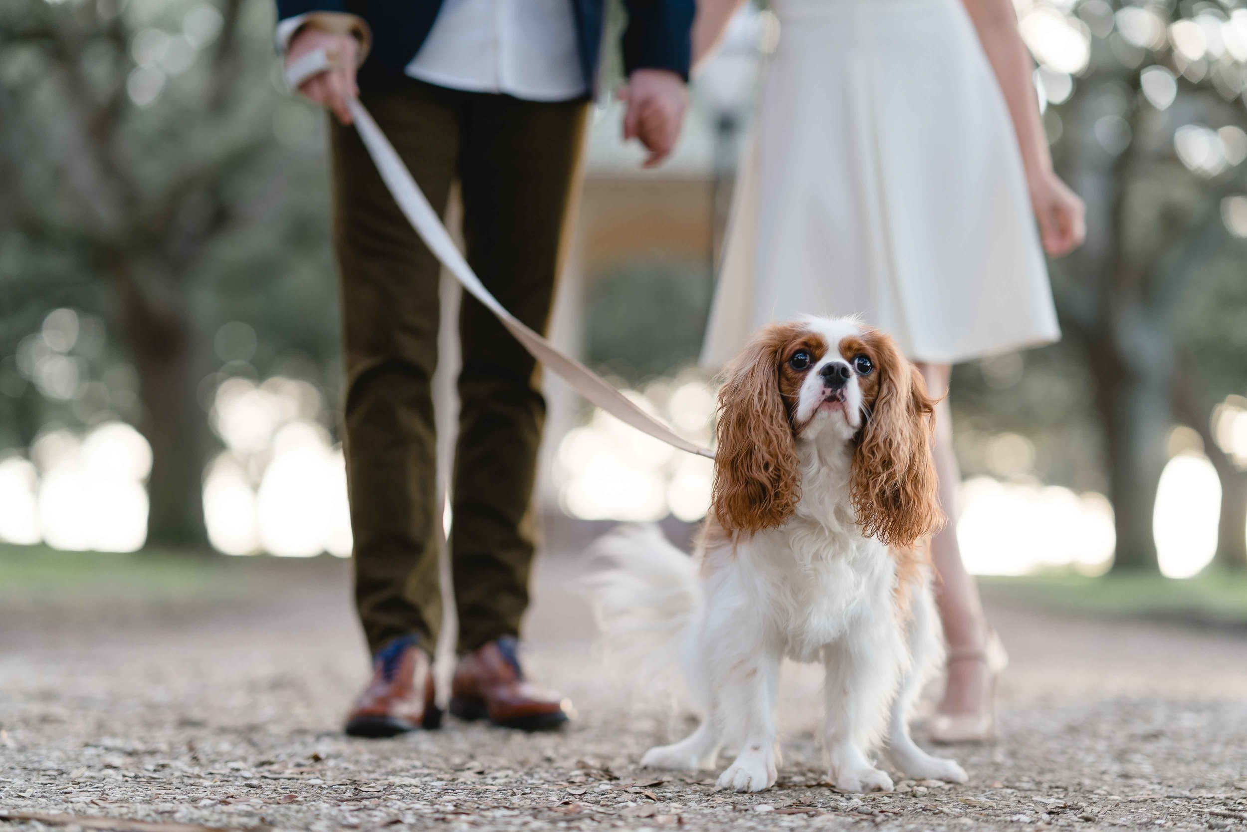 Digital_Spark_Weddings_Photo_Charleston_Charlotte_NC1.jpg