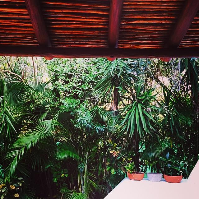 alibeletic-tropical.jpg