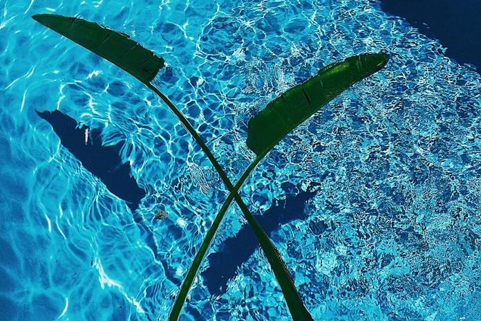 ali-beletic-tropical-pool.jpg
