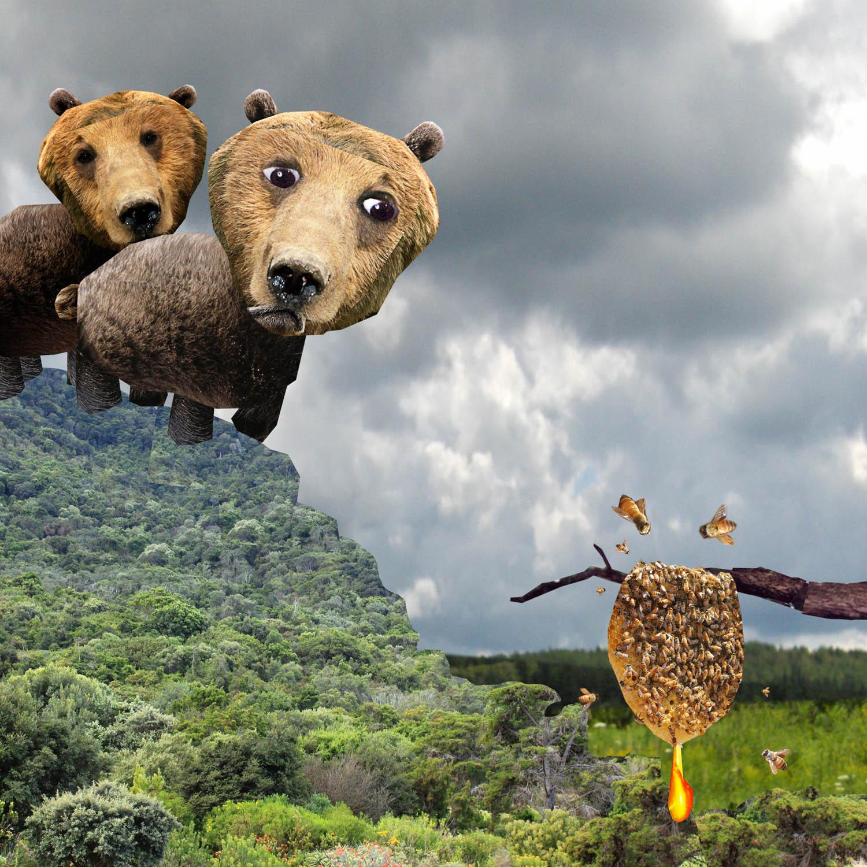bears-adj-hi pass face copy.jpg