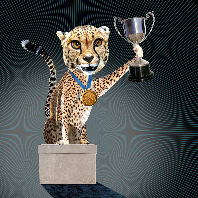 cheetah-background copy.jpg